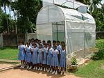 Organic Greenhouse in Sri Lankan School - 2004 Winner