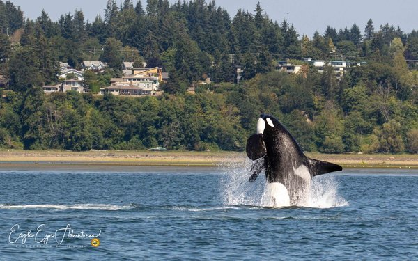 Responsible whale watching in Vancouver Island, Canada