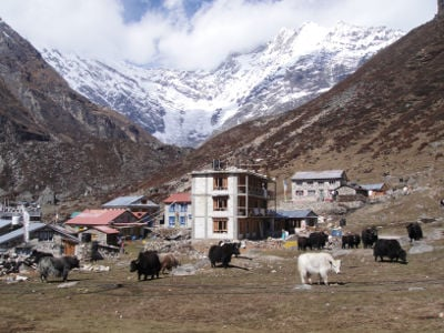 Tourism business and animal husbandry go hand in hand in Langtang National Park