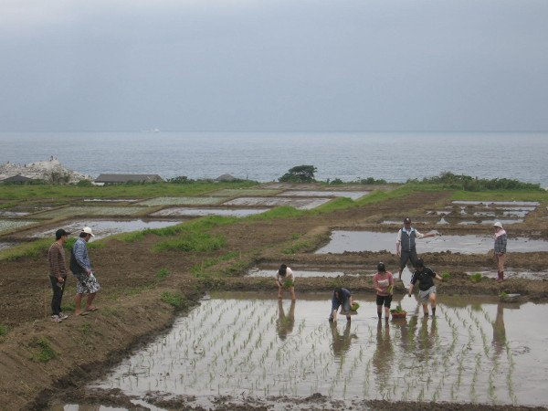 Planting event for the Ocean Rice