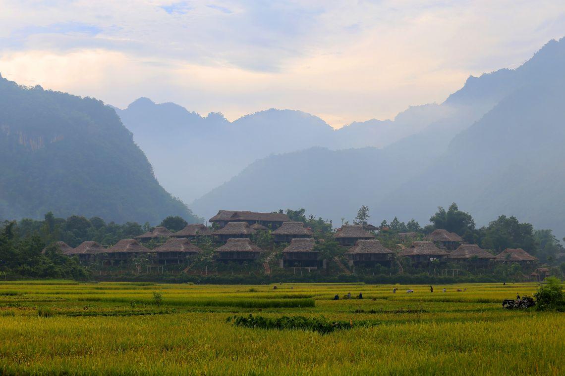 Treu Thanh Hoa