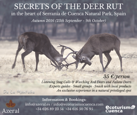 Discover the secrets of the red deer rut in Spain