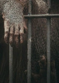 170502-zoos-b