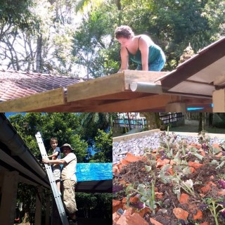 A First Attempt at a Green Roof