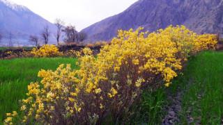 Trekking from Chitral Town to Drosh, KPK, Pakistan | by Batuta Travels | Mar, 2021 | Medium