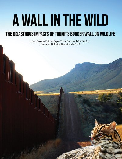 the proposed usmexico border wall threatens habitat of 25 endangered center for biological diversity