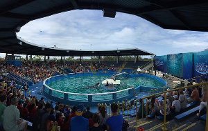 Orca Sentenced to Lifetime Confinement