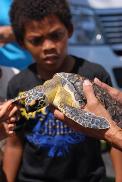 Educating the young generation about the critically endangered hawksbill turtle (Photo by Brad Nahill/SEE Turtles)