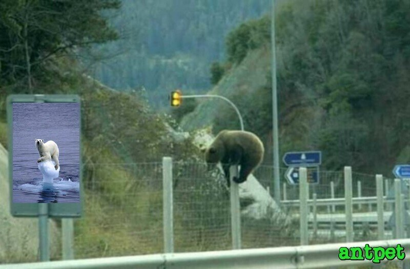 Two victims, same culprit! A Brown bear trying to cross Egnatia Motorway in Northern Greece, earlier this week.