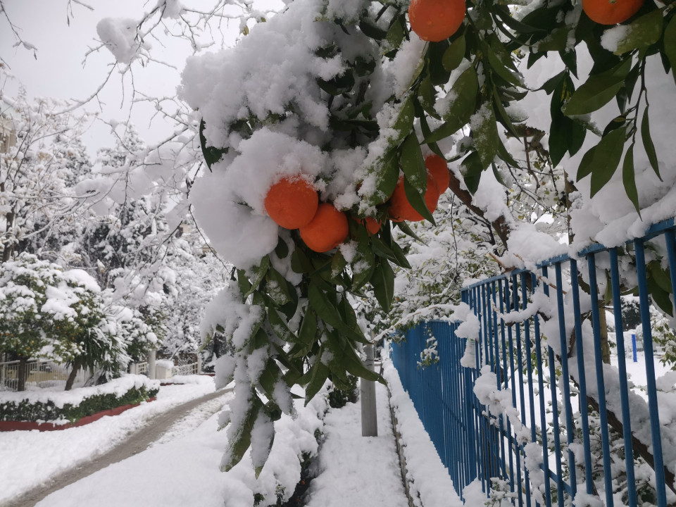 16 February 2021, record snowfall in Athens, bitter oranges are ... bitter!