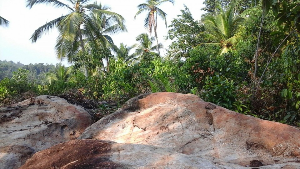 Elevated land with Cinnamon and Coconut cultivation in Ampegama (close to Hikkaduwa tourist city) available for JV project or quick sale. Very ideal for eco friendly hoel/villas. Clear deed. For more details, please contact. Gunarathna +94776525003 WhatsApp, imo and Viber available. pg_gunarathna@yahoo.com