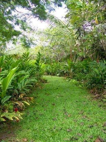 A walk in the property's botanical gardens