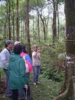 Organic Tour in Rainforest Retreat